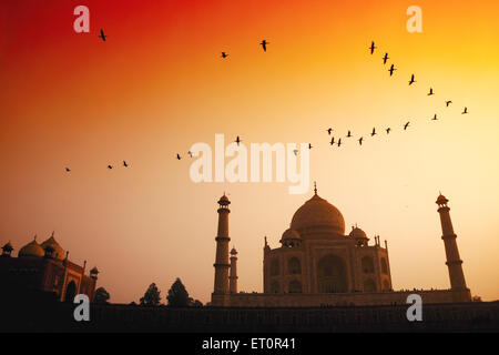 Birds flying in sky over Taj Mahal at sunset ; Agra ; Uttar Pradesh ; India - Stock Photo