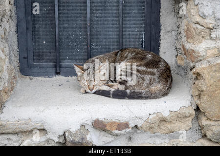 The cat sleeps on the window - Stock Photo