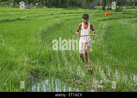 Rural youth using weeding implement in paddy field socio economic initiative by NGO Chinmaya Organization of Rural - Stock Photo