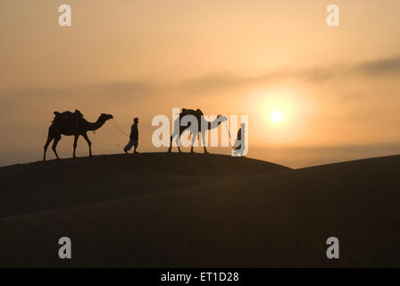 Man with camels walking on sand dune of khuhri ; Jaisalmer ; Rajasthan ; India - Stock Photo