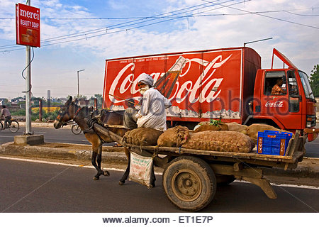 Man carrying vegetables jute sacks on horse cart in Ludhiana ; Punjab ; India - No Model Release - Stock Photo