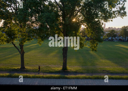 Jogger runs under 100 year-old ash trees in a park in the south London borough of Lambeth. - Stock Photo