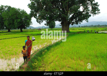 Ho tribes mother and child walking through paddy field ; Chakradharpur ; Jharkhand ; India NO MR - Stock Photo