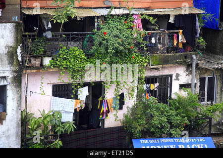 Plants and drying cloth in slum Behram Naupada ; Anant Kanekar Marg ; Bandra ; Bombay Mumbai ; Maharashtra - Stock Photo