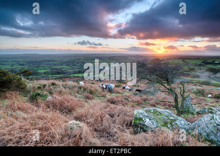Sunset over horses grazing on Bodmin Moor in Cornwall - Stock Photo