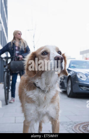 Close-up of mongrel dog with teenage girl standing in the background, Munich, Bavaria, Germany - Stock Photo