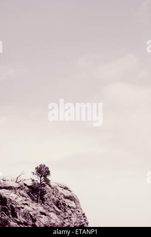 A lone tree on a mountain cliff. - Stock Photo