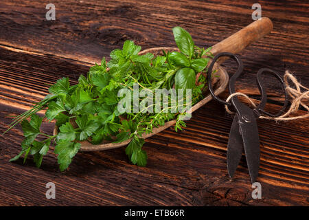 Various aromatic culinary herbs. Thyme, marjoram, basil, mint, chives and parsley on wooden spoon, with old scissors - Stock Photo