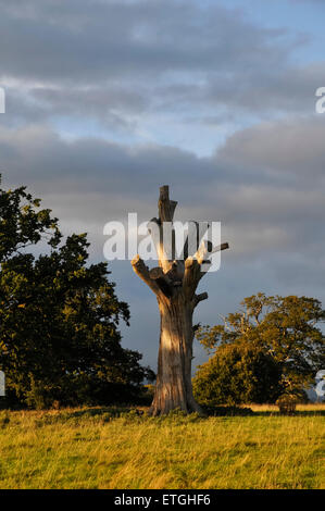 Dead old tree in the field England Europe - Stock Photo