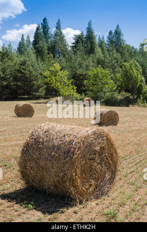 Rural landscape with hay bales - Stock Photo