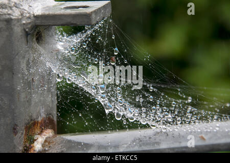 A spiders web covered in rain droplets - Stock Photo