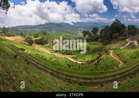 Haputale, railway running through tea plantations on a tea estate in the Sri Lanka Hill Country, Nuwara Eliya District, - Stock Photo