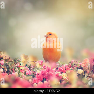 Yellow Bird Perches In Flower Garden - Stock Photo