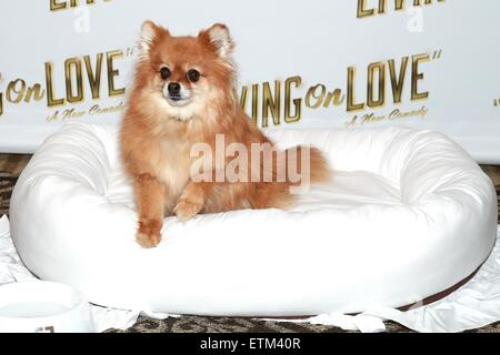 Press junket for Broadway play Living On Love held at the Empire Hotel.  Featuring: Trixie Where: New York City, - Stock Photo