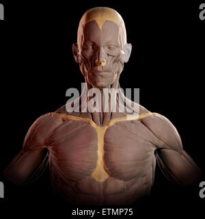 Conceptual image in the style of a clay model of the muscles of the face and upper body. - Stock Photo