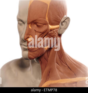 Conceptual image in the style of a clay model of the face with muscle exposed on one side. - Stock Photo