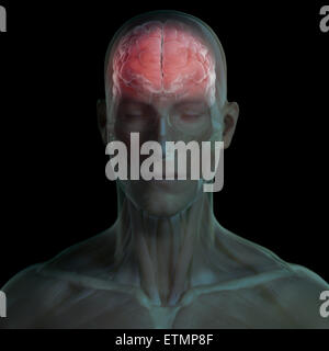 Conceptual image of the face with muscles and brain visible. - Stock Photo