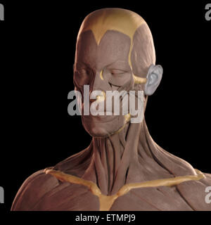 Conceptual image in the style of a clay model of the muscles of the face. - Stock Photo