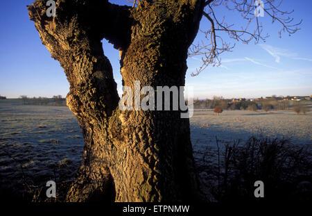 BEL, Belgium, Eastbelgium, tree and fields near Astenet.  BEL, Belgien, Ostbelgien, Baum und Felder bei Astenet. - Stock Photo