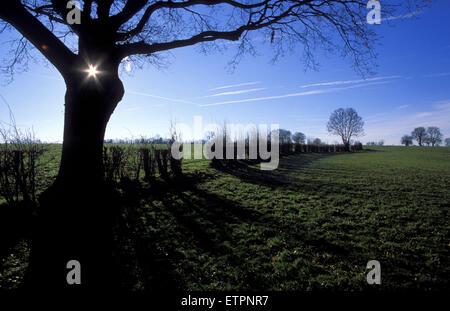 BEL, Belgium, Eastbelgium, tree and fields near Walhorn.  BEL, Belgien, Ostbelgien, Baum und Felder bei Walhorn. - Stock Photo