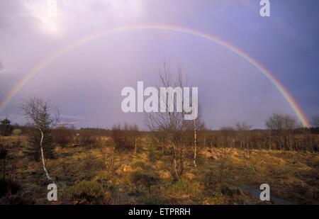 BEL, Belgium, Eastbelgium, Hautes Fagnes, Hohes Venn, rainbow.  BEL, Belgien, Ostbelgien, Hohes Venn, Regenbogen. - Stock Photo