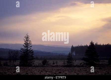 BEL, Belgium, Eastbelgium, Hautes Fagnes, Hohes Venn, evening sky with clouds.  BEL, Belgien, Ostbelgien, Hohes - Stock Photo