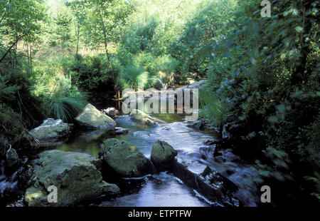 BEL, Belgium, Eastbelgium, Hautes Fagnes, Hohes Venn, the river Tros Marets near Hockai.  BEL, Belgien, Ostbelgien, - Stock Photo