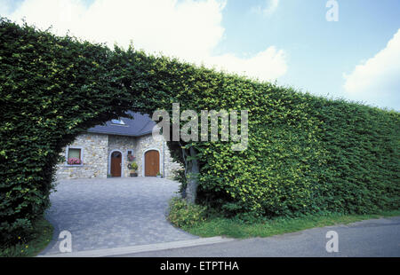 BEL, Belgium, Eastbelgium, Xhoffraix, the village of the hedges. <the high beech-hedges protect the houses against - Stock Photo