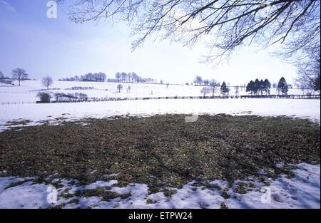 BEL, Belgium, Eastbelgium, snow covered fields near Robertville.  BEL, Belgien, Ostbelgien, schneebedeckte Felder - Stock Photo