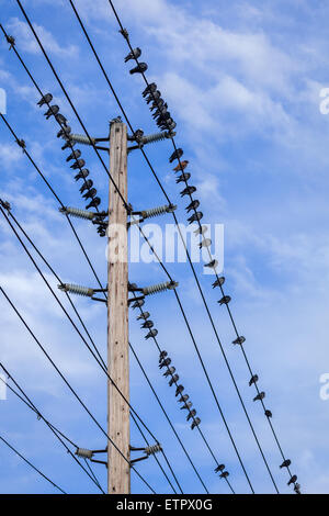 Birds on power lines with a blue sky background. - Stock Photo