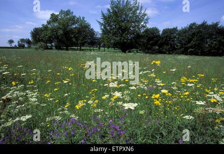 BEL, Belgium, Eastbelgium, meadow between Faymonville and Schoppen near Waimes.  BEL, Belgien, Ostbelgien, Wiese - Stock Photo