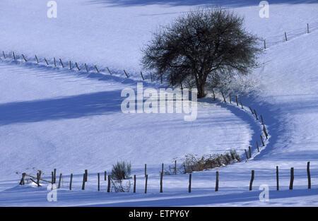 BEL, Belgium, Eastbelgium, snow covered fields near Buellingen.  BEL, Belgien, Ostbelgien, schneebedeckte Felder - Stock Photo