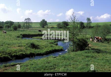 BEL, Belgium, Eastbelgium, the river Ambleve near Ambleve.  BEL, Belgien, Ostbelgien, die Amel bei Amel. - Stock Photo