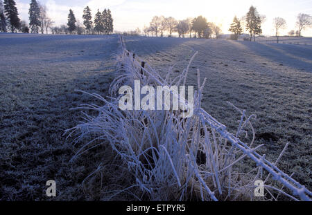 BEL, Belgium, Eastbelgium, winter landscape near Burg-Reuland Gruefflingen, hoarfrost.  BEL, Belgien, Ostbelgien, - Stock Photo