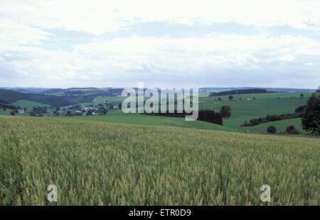 BEL, Belgium, Eastbelgium, fields near Bracht near Burg Reuland.  BEL, Belgien, Ostbelgien, Felder bei Bracht nahe - Stock Photo