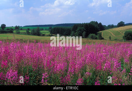 BEL, Belgium, Eastbelgium, fields near Buellingen.  BEL, Belgien, Ostbelgien, Felder nahe Buellingen. - Stock Photo