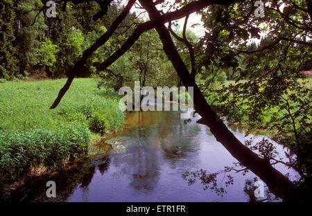 BEL, Belgium, Eastbelgium, Amel-Montenau, the river Ambleve in the Kuckerell forest.  BEL, Belgien, Ostbelgien, - Stock Photo