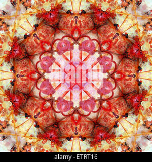a mandala montage from collected acre flowers, - Stock Photo