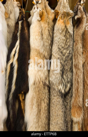 Furs, Grizzly Mountain Long Rifles Horse Ridge Rendezvous, Deschutes County, Oregon - Stock Photo