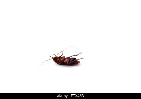 Dead cockroach with long feelers on white background - Stock Photo