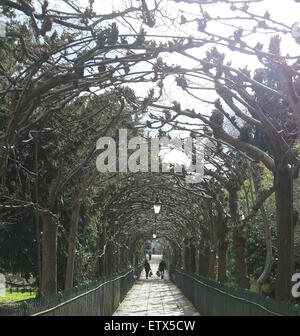 An arch of trees in winter over a footpath in Clifton, Bristol, England, UK. - Stock Photo
