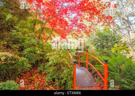 Japanese garden with footbridge and gazebo in Autumn. - Stock Photo