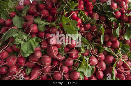 Fresh radishes  for sale at the Grand Army Plaza Farmers Market in Park Slope, Brooklyn, NY. - Stock Photo