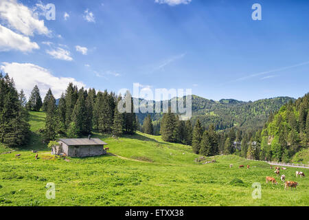 Landscape near Spitzingsee with cows in the Alps in Bavaria, Germany and free space in sky - Stock Photo