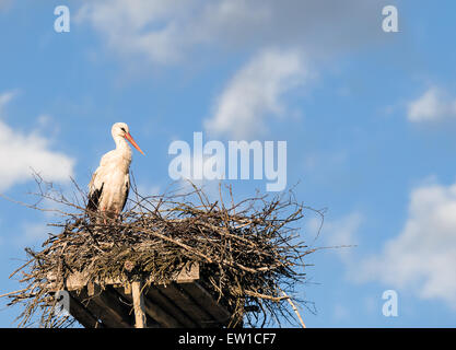 White Stork (Ciconia ciconia) standing on the nest, blue sky and white clouds in the background - Stock Photo