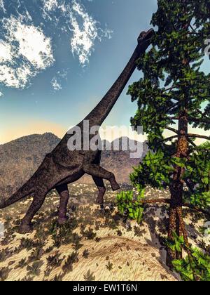 Brachiosaurus dinosaur grazing on a Wollemia pine tree. - Stock Photo