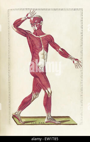 The science of human anatomy by Bartholomeo Eustachi, depicting the shape, size and relative position of the organs - Stock Photo