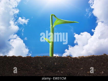 Small sprout on sky. Conceptual scene. - Stock Photo