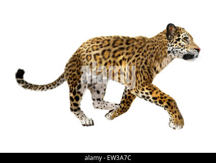 3D digital render of a big cat jaguar running isolated on white background - Stock Photo