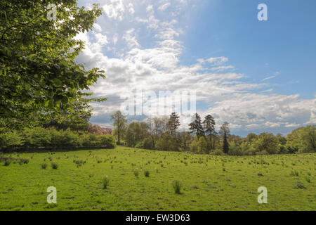 Landscape view from Clandon Park, in West Clandon, just outside Guildford, Surrey, South East England, in the United - Stock Photo